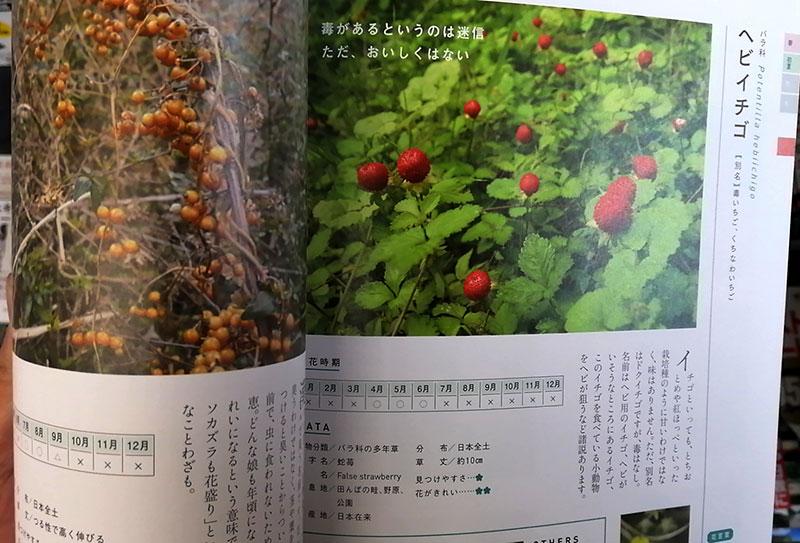 四季の草花図鑑 ヘビイチゴ-毒はない