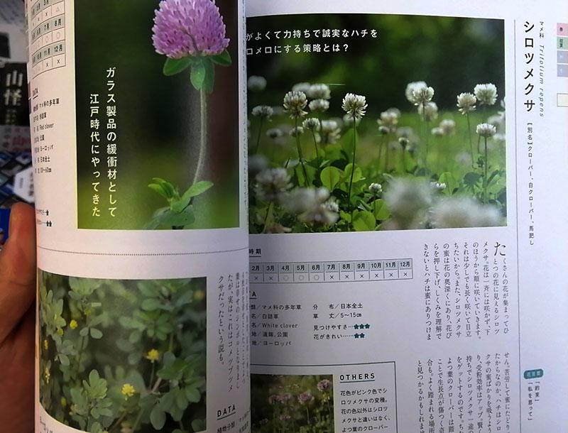 四季の草花図鑑 中身-シロツメグサ