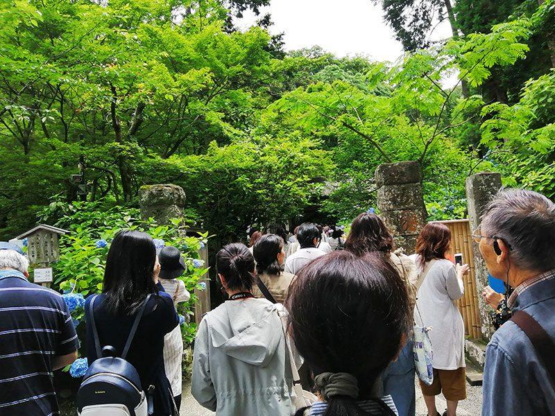 北鎌倉 明月院の混雑状況