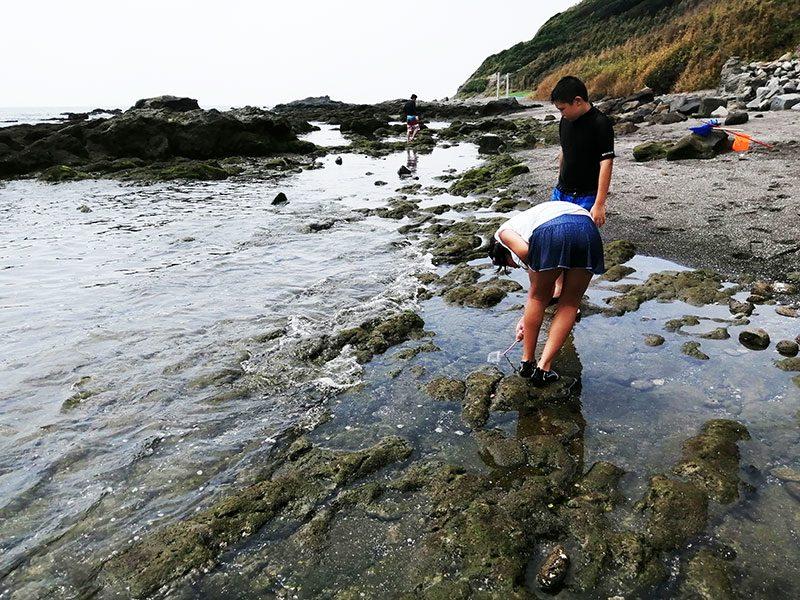 磯遊び 海水浴 三浦 海