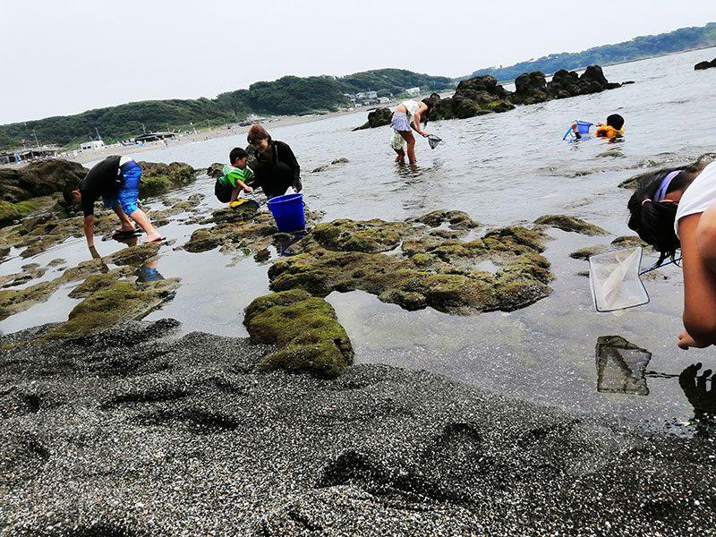 三浦の海 磯遊び 海水浴
