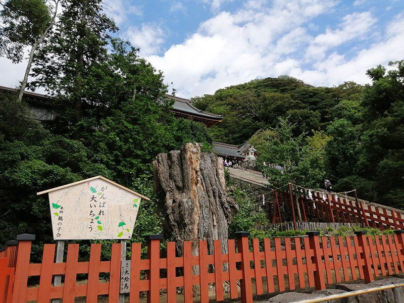 鎌倉 鶴岡八幡宮 大銀杏