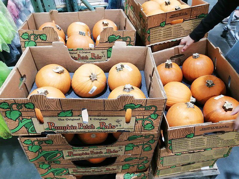 ハロウイン ジャック‐オーランタン用のかぼちゃ コストコ