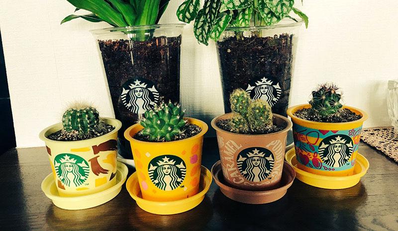 スタバのコーヒーカップ 植物ポットに