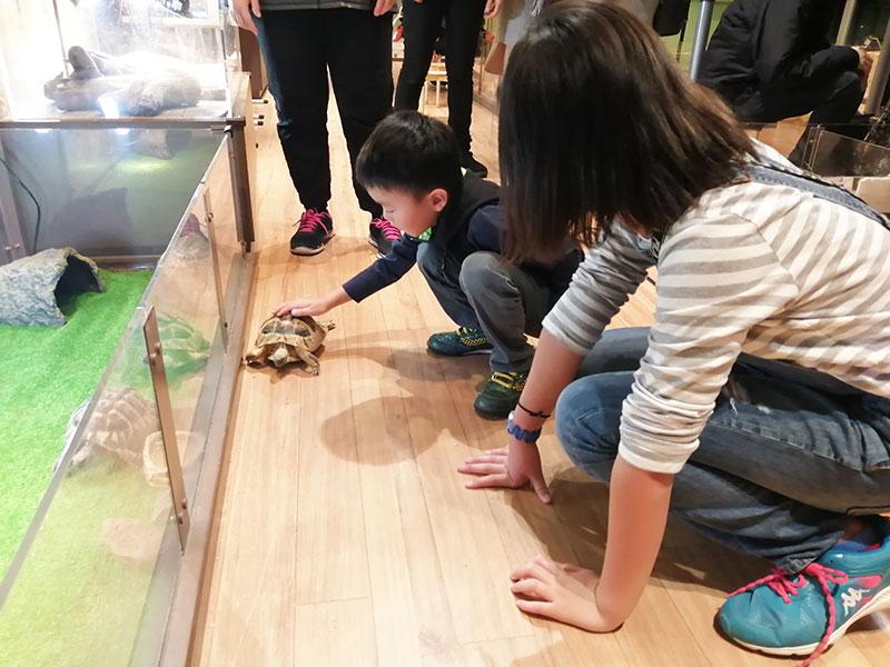 みなとみらい オービィ横浜 どんな動物と触れ合える?