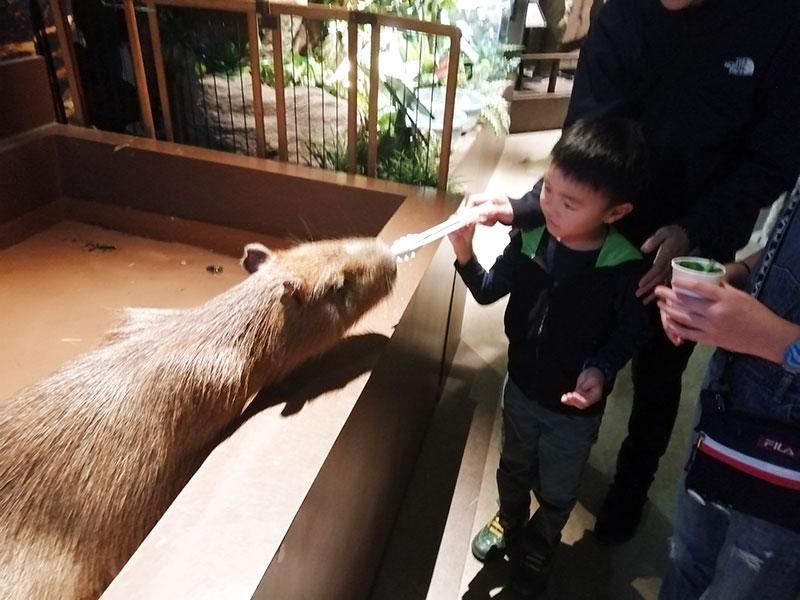 マークイズ オービィ横浜にいる動物は何?