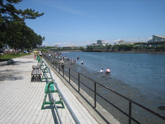 海の公園 野島公園 どちらがアサリがとれる?
