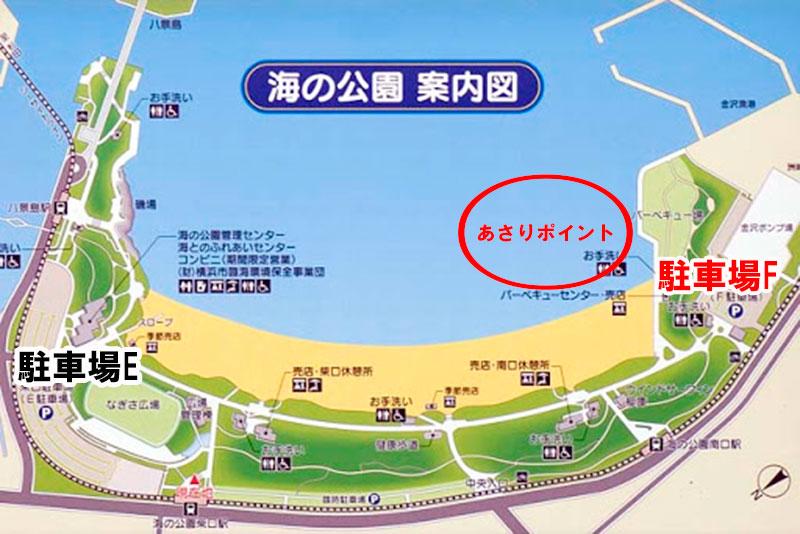 海の公園 あさりが採れる場所はどこへん?