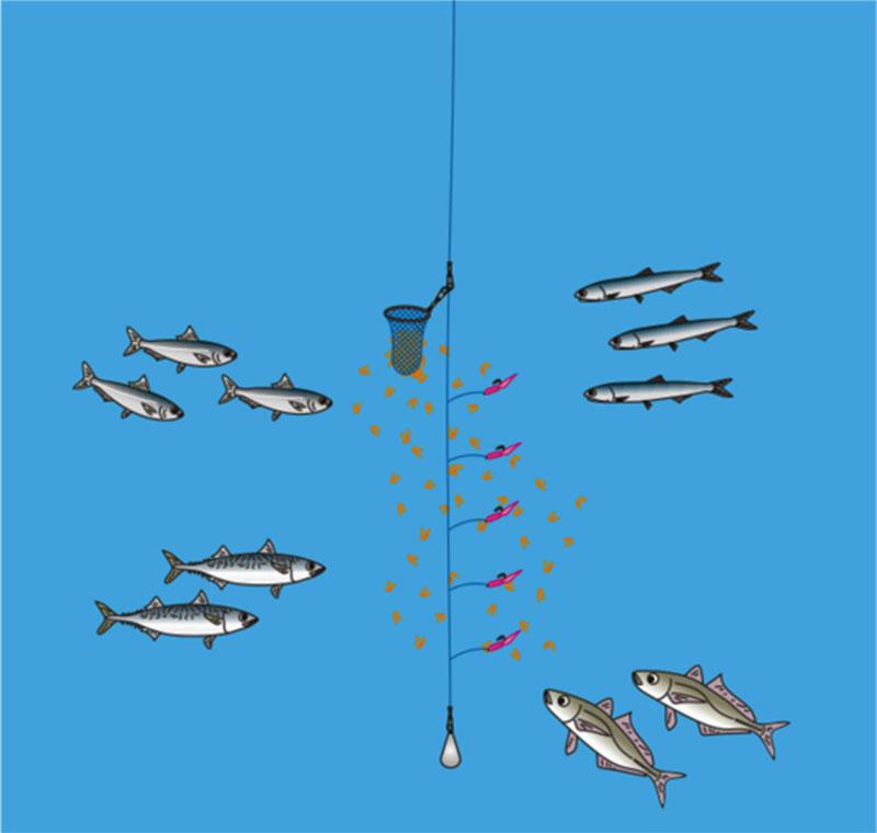 海釣りをはじめる サビキ釣りって何?