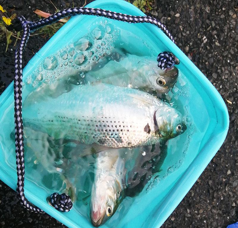 海釣り初心者 神奈川 横浜 おすすめの釣り場は?