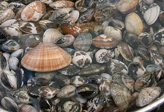 海の公園 2020年 潮干狩り 日程