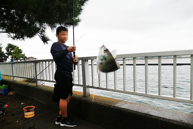 野島公園 アジが釣れる場所はどのへん?