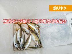 横浜でアジが釣れる場所はどのへん?
