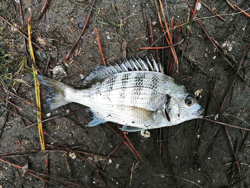 金沢八景島周辺 アジが釣れる場所はどこ?