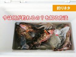 横浜 今は何が釣れる?釣れる魚を知る方法はある?