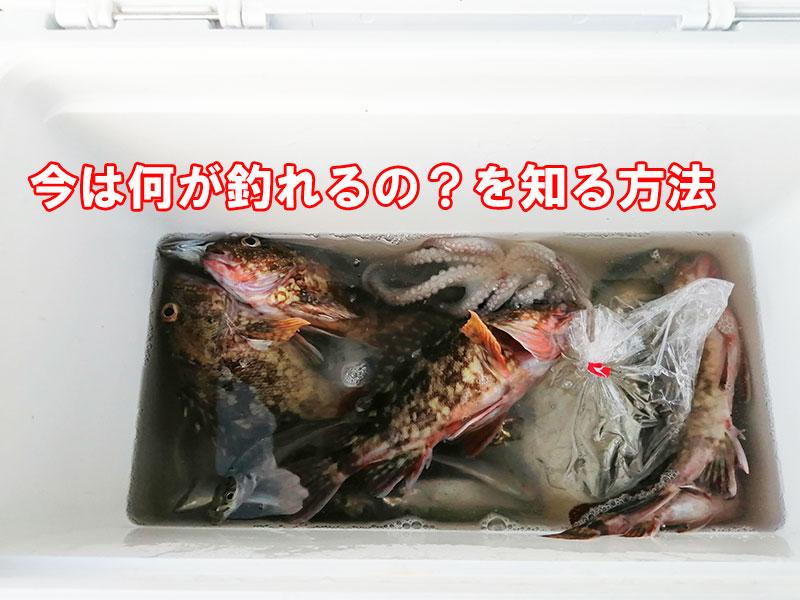 神奈川 横浜 冬に釣れる魚は何?