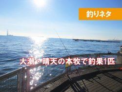 大潮の本牧海釣り施設は釣れるの?