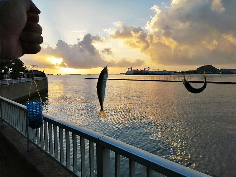 海釣り初心者 サビキ釣り おすすめの仕掛けは?