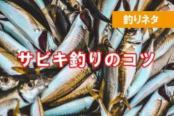 海釣り未経験 サビキ釣りで魚を釣る方法は?