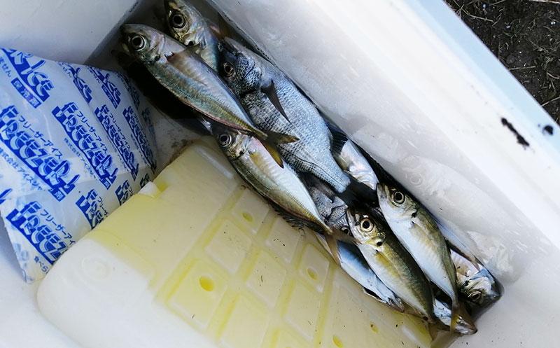 横浜 冬 サビキでも魚は釣れる?