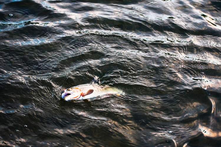 サビキ釣りで たくさん釣るのに大切なことは?