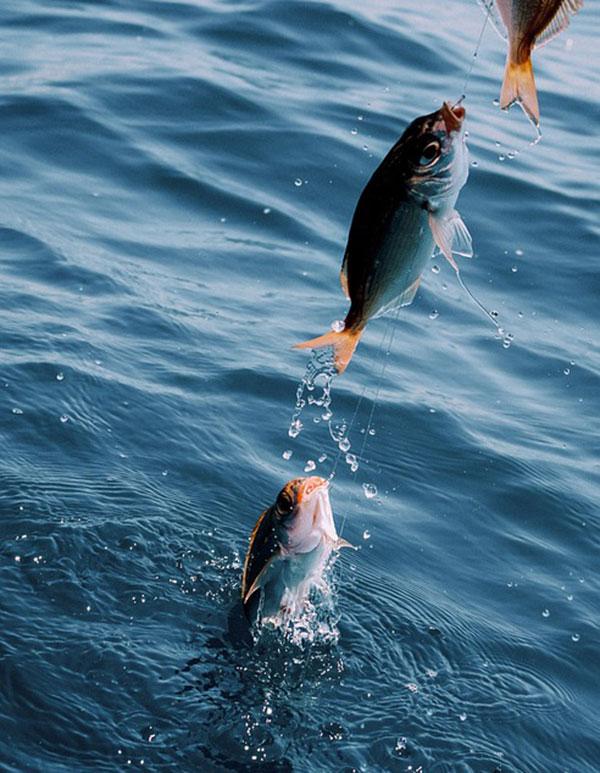 海釣り サビキ釣り 初心者が釣るコツは?