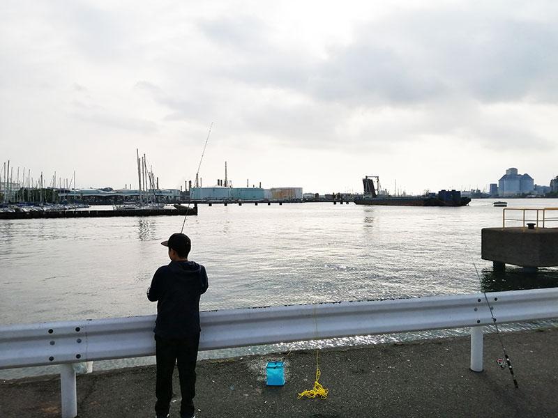 根岸港 釣れる魚は何?