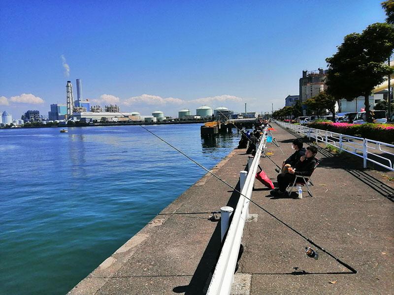 春の根岸港は何が釣れるの?