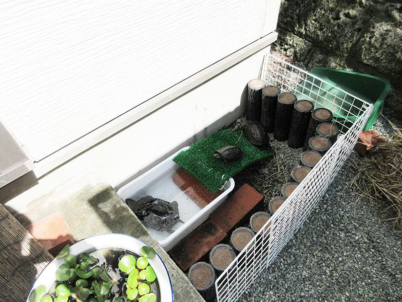 外で亀を飼っている人のブログ