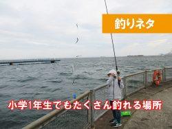 神奈川 サビキ釣りで釣れる場所はどこ?