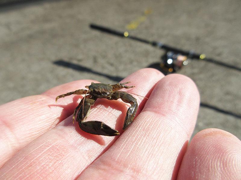 本牧海釣り施設 初心者でも魚は釣れる?