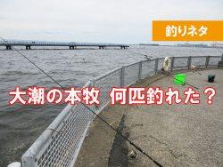 大潮の本牧海釣り施設 何が釣れた?