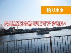 八景島駅 アジは釣れてる?釣果は?