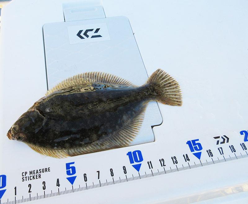 磯子 根岸港では何が釣れるの?
