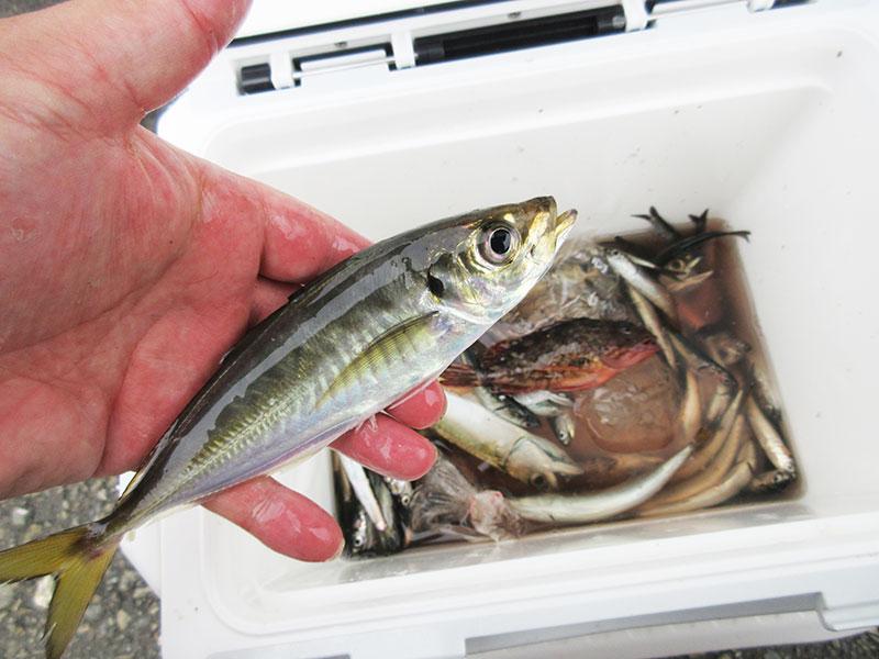 本牧海釣り公園 アジが釣れるポイントは?