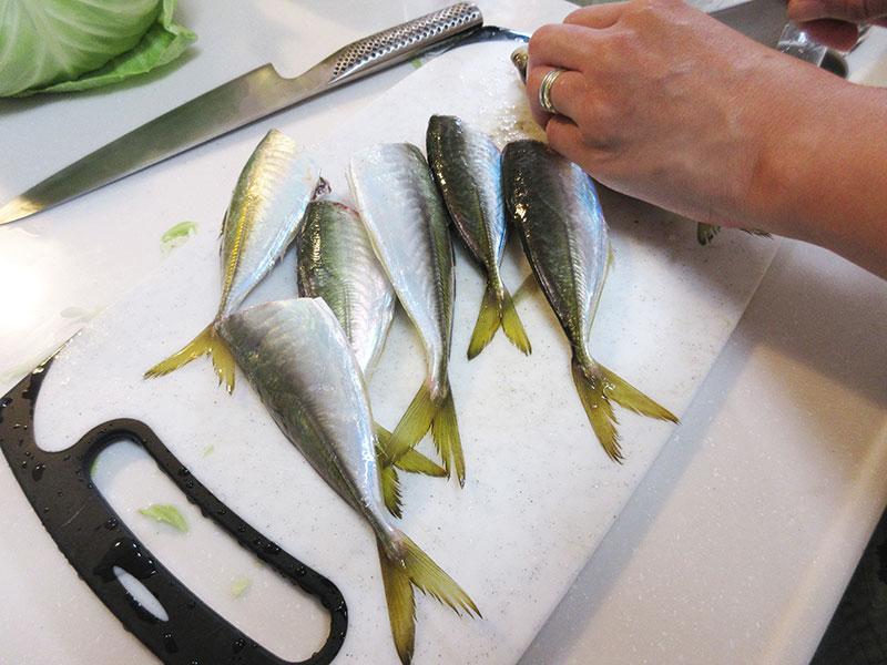 横浜 10月でもアジは釣れるの?